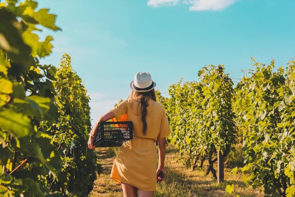 Weinpaket bestellen und Nachhaltigkeit fördern